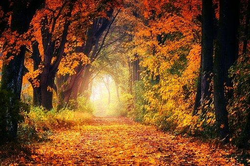 Herfst naar buiten